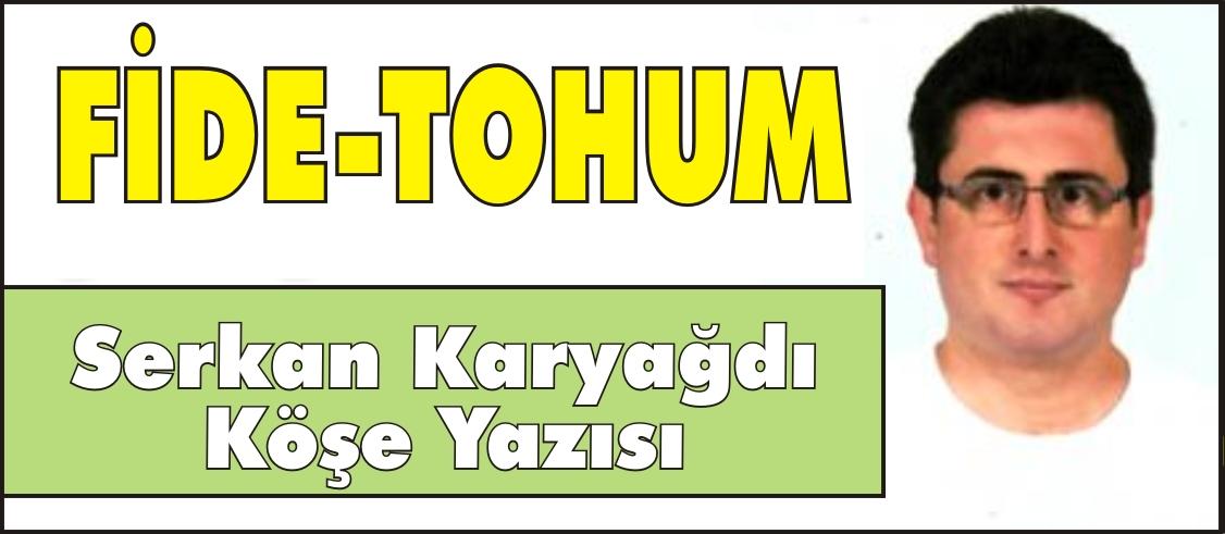 FİDE-TOHUM