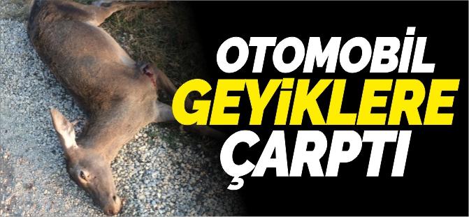 GEYİKLERE OTOMOBİL ÇARPTI
