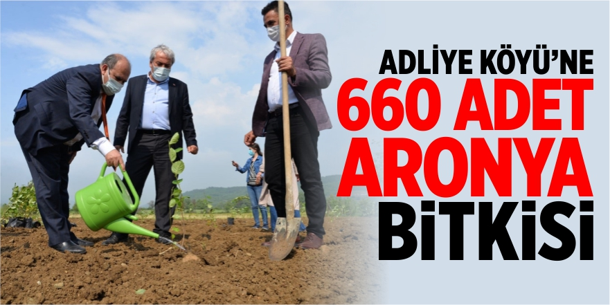 ADLİYE KÖYÜNE 660 ADET ARONYA BİTKİSİ