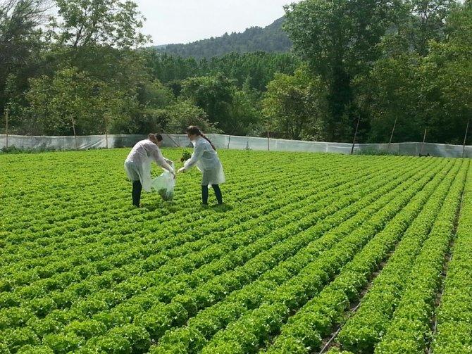 hasat-oncesi-pestisit-denetimleri-devam-ediyor-(2).jpg